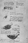 Studies of Water Formations, c1480 (1945)
