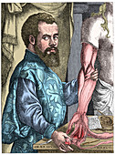 Andreas Vesalius, 16th century Flemish anatomist