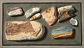 Specimens of volcanic matter, 1776