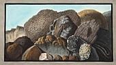 Lava, Scoria, and Pumice stones and Mount Vesuvius, 1776