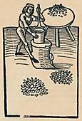 Crushing Herbs in a Mortar, 1947