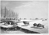 A buffalo pound, Canada, c1819-1822