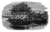 Eel bucks on the Thames, 19th century