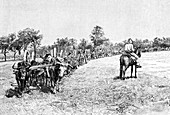 A convoy of wagons, South America, 1895