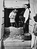 Howard Carter excavating a tomb, Egypt, 1922