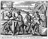 Khoikhois breaking-in oxen, South Africa, 18th century