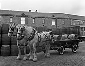 Tetley shire horses and dray, West Yorkshire, 1966
