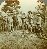 Tiger hunting, Cooch Behar, West Bengal, India
