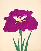 Hizume-No-Hyoshi, No 29, 1890, colour woodblock print
