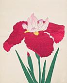 Yamamatayama, No 83, 1890, colour woodblock print
