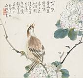 A Chinese Hwamei, 1857