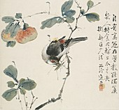 A Chinese Hwamei eating a grasshopper, 1857