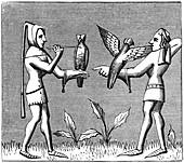 Falconers dressing their birds, 14th century