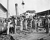 Loading bananas, Port Antonio, Jamaica, c1905