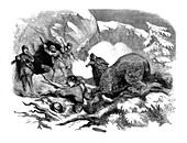 Jack Curling's narrow escape from a ferocious bear, 1855