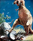 Triceratops held down by a Tyrannosaur