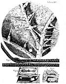 Robert Hooke's Micrographia, 1665