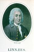 Carolus Linnaeus, Swedish scientist and naturalist