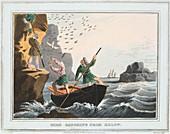 Bird Catching from Below', Shetland Islands, 1813