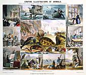 Crustacea and Reptiles', c1850
