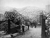 Coconut fibre works, Millwall, London, 1885