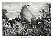 New Caledonian Native Hut', southwest Pacific, 1877