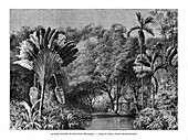 Botanical garden, Saint-Pierre, Martinique, 19th century