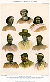 Ethnology, Races of Man', 1800-1900