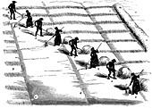 Crop rotation: haymaking, 1855