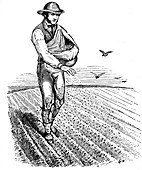 Crop rotation: sowing seed broadcast, 1855