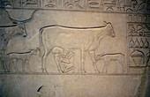 Sarcophagus, Middle Kingdom, Ancient Egyptian, c2040-1786 BC