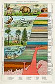 Geology and Palaeontology', c1880