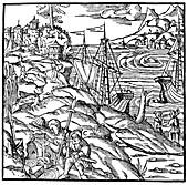 The Argonauts finding the Golden Fleece, 1556