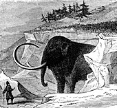 Discovery of a woolly mammoth, 1779