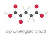 Alpha-ketoglutaric acid molecule