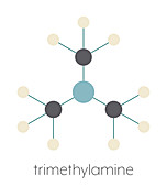 Trimethylamine volatile tertiary amine molecule