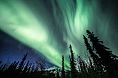 Aurora Borealis over a forest in Alaska
