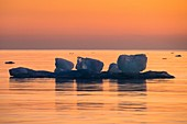 Ice floes at sunrise
