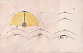 Comparative embryology by von Baer, 1828