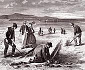 Preparing sand lines for fishing, 19th century