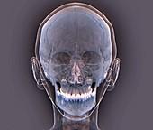 Normal human skull, 3D CT scan