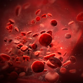 Red blood cells in vessel, illustration