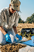 Soil scientist taking soil sample