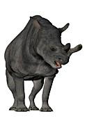 Megacerops, illustration