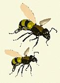 Bees, illustration