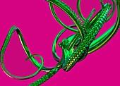 Octopus, illustration