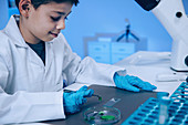 Schoolboy putting leaves on microscope slide