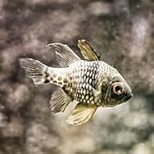 Depressive Fish