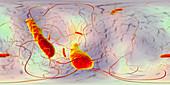 Clostridium difficile bacteria, illustration