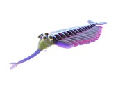 Opabinia marine arthropod, illustration